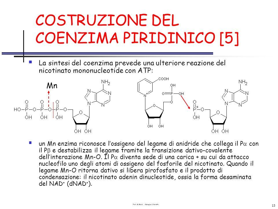 COSTRUZIONE DEL COENZIMA PIRIDINICO [5]